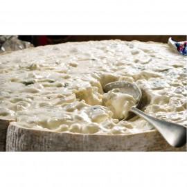 Formatge Gorgonzola de cullera - 26,90€/kg
