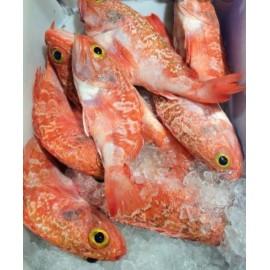 Peix Roca. Safata de 500g aprox.